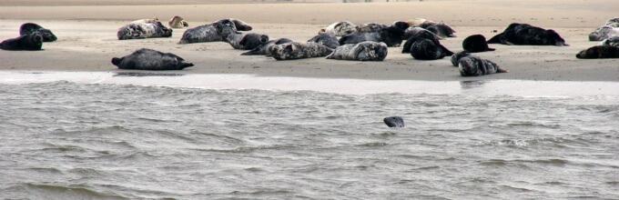 Zeehonden kijken op terschelling webcam
