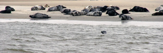 Zeehonden strand