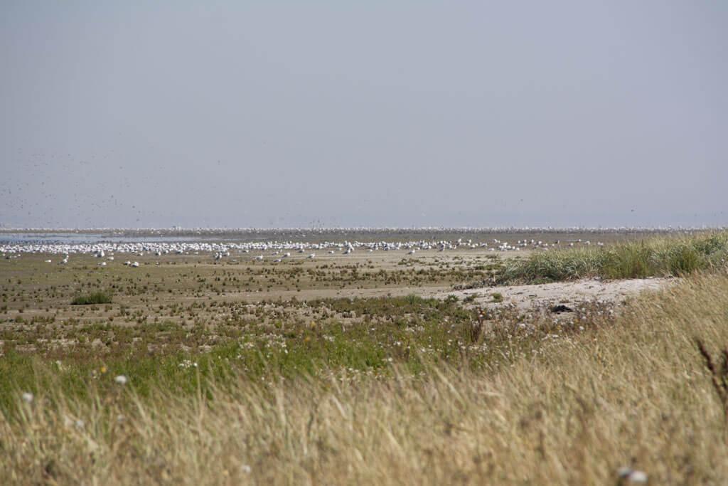 Vogels Griend strand